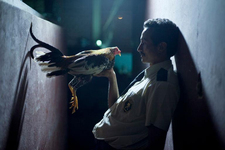 Por las plumas