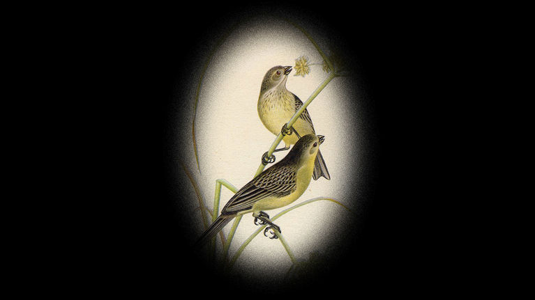 W.H. Hudson's Remarkable Argentine Ornithology