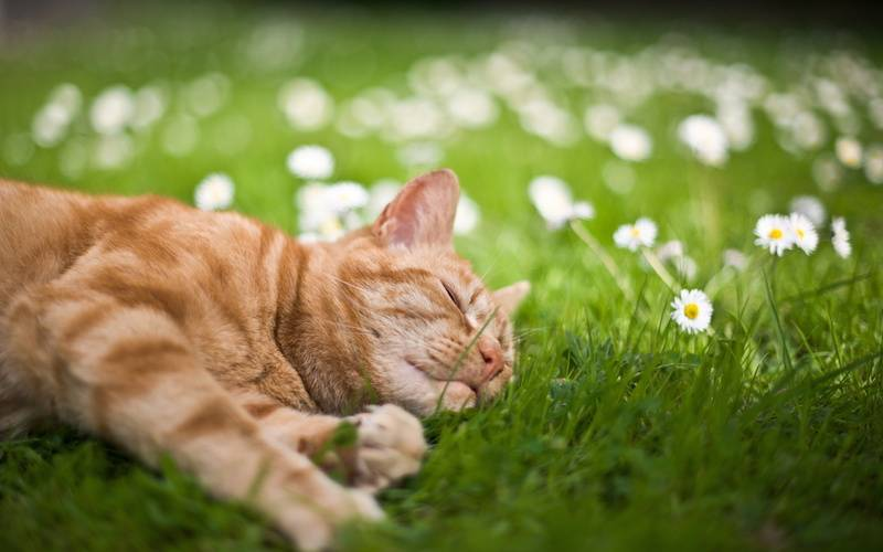 a cat sleeping in the grass