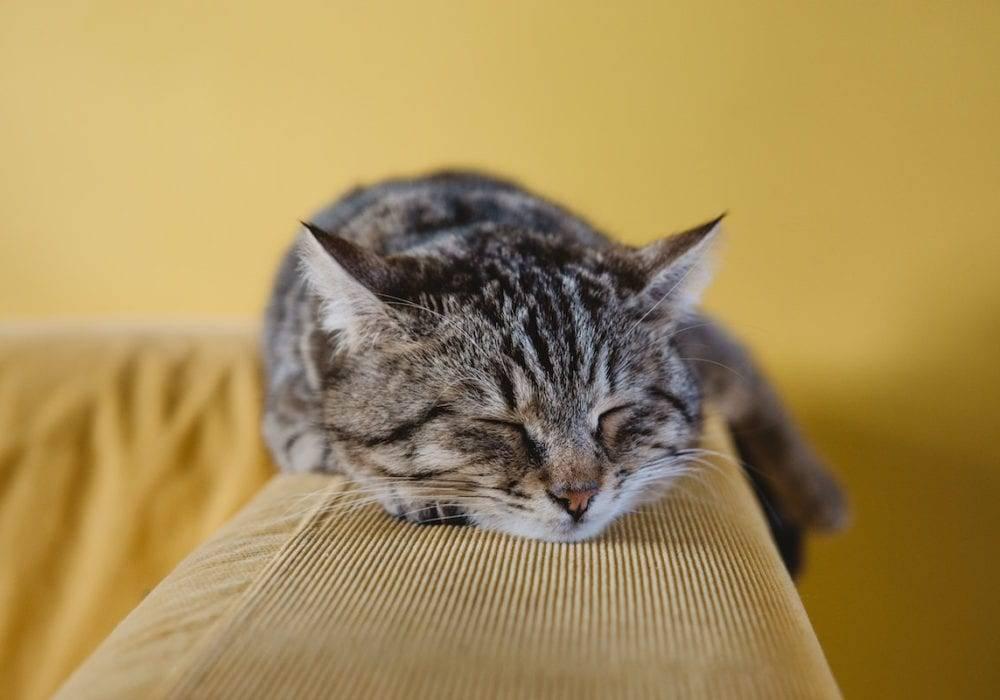 sleeping cat tips for better sleep