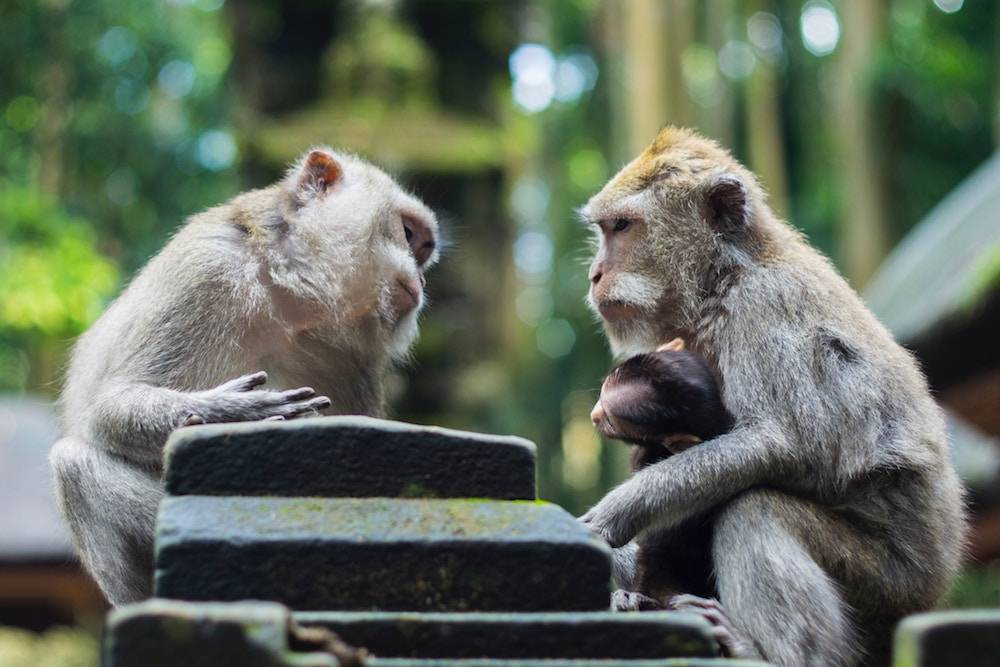 how to have better conversations - two monkeys talking