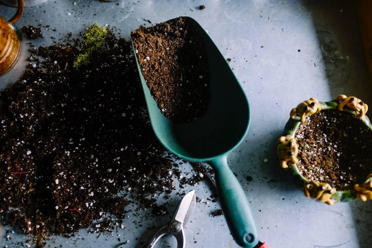 unique hobbies indoor and outdoor - gardener with soil