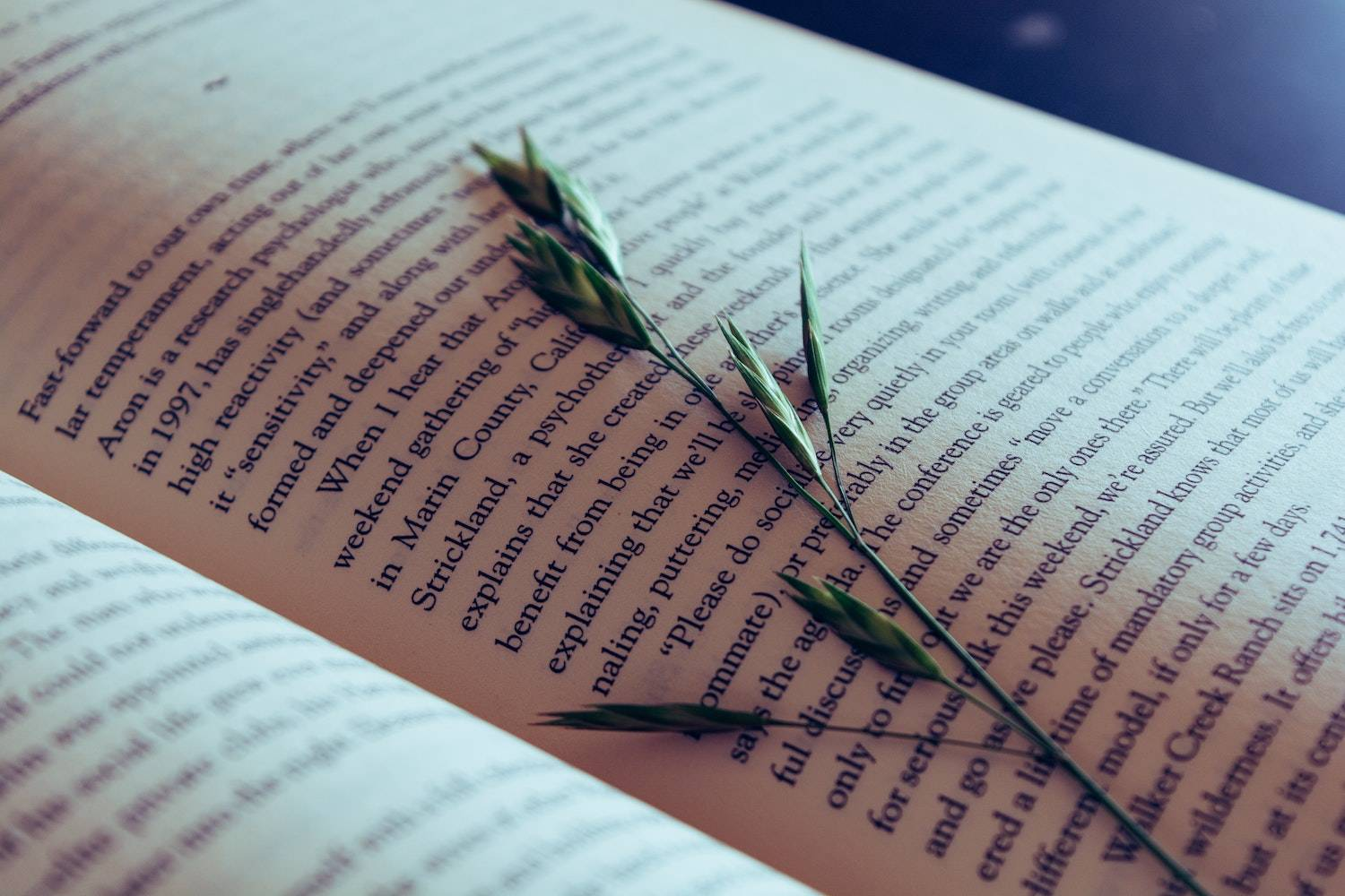 End of the Year Reflection Questions: a single wild flower on top of the page of an open book