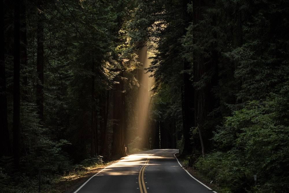 light shining down into a dark forrest
