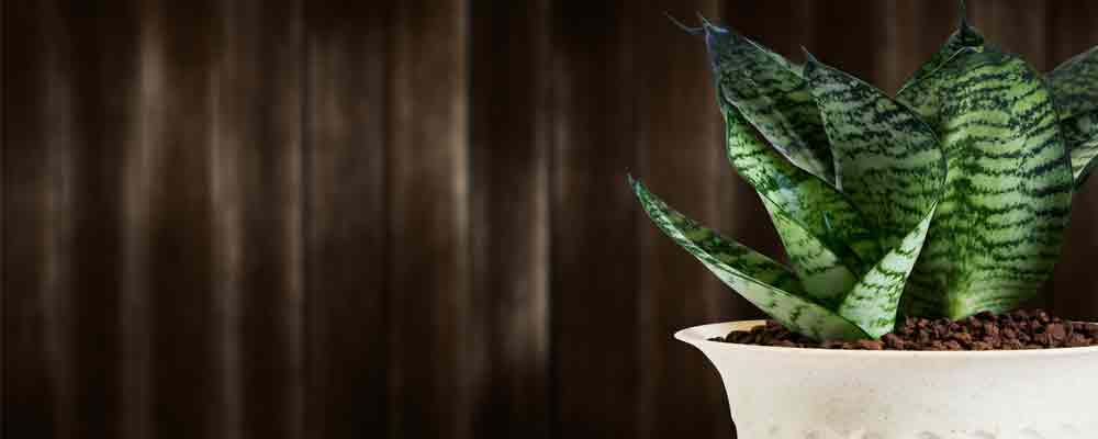 Six stress relieving plants to make your home more peaceful