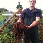 SEEING RED: Galilee fisherman Ben Piquette displays a handful of the invasive, red weed. In the background is crewman Peter D' Ambra. / PBN PHOTO/JOHN LEE