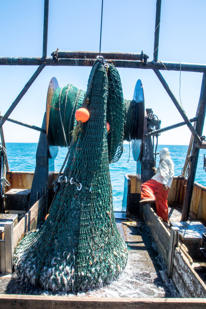 """FRESH CATCH: Off Nantucket, the Point Judith boat Lena Pearl's squid net comes up the stern as deckhand Chris Gillis hustles to """"trip it open"""" and get the net back in the water quickly. / PBN PHOTO/JOHN LEE"""