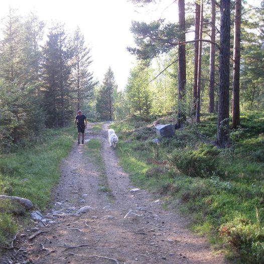 Svarthattan  980 moh. En lett og fin tur - for store og små.