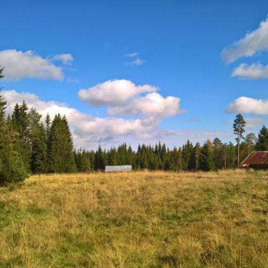 Veensætra og Svartskogkoia