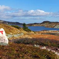 Lifjell Vest - fra Grimåsen til Store Tjorbuvatn