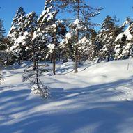 Skitur til Rislåknuten