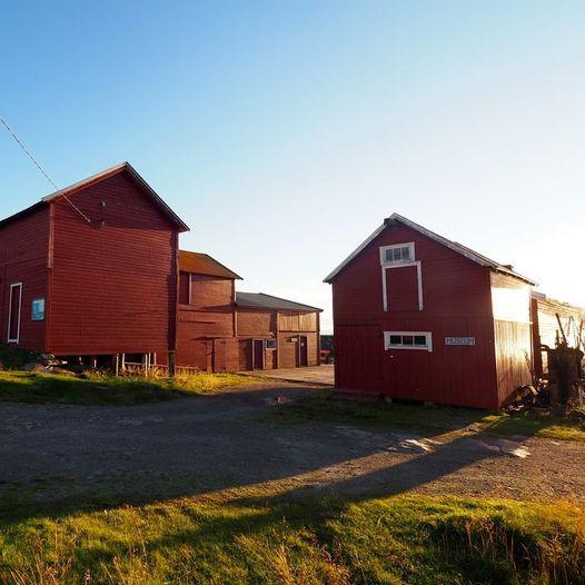 Fottur rundt Ekkerøya, fuglefjell og naturreservat ved Varangerfjorden