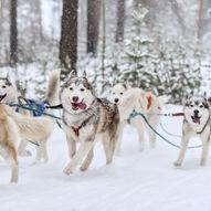 Hundekjøring på Gålå
