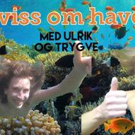 Havets Kviss // Rokken