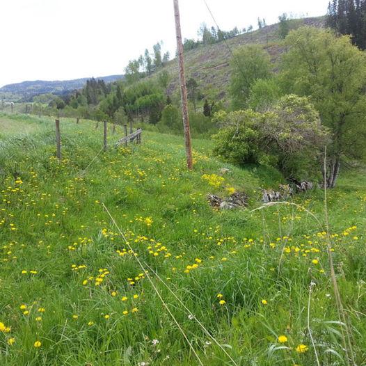 En historisk vandring langs Den Bergenske Kongeveg gjennom Lunner