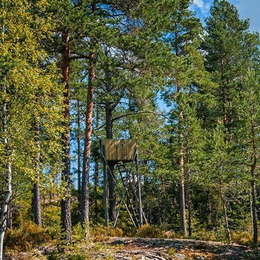 Skogstur fra Kopperud til Kohinor, Bjørnholen, Småtjerna og Rakkermåsan