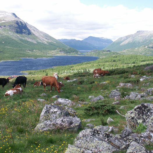 Stølsruta i Valdres - Historisk Vandrerute