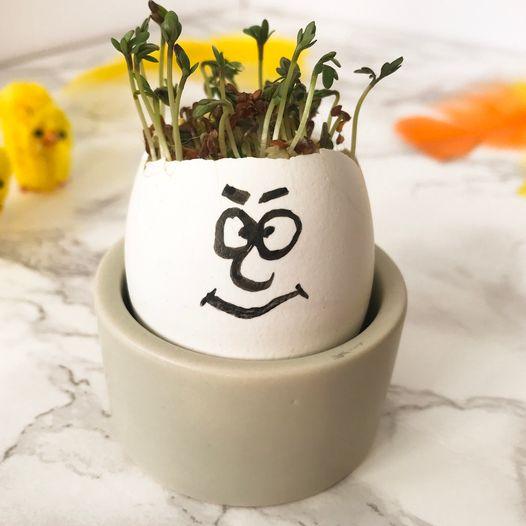 Så karse i tomme eggeskall og få et artig hode med hår
