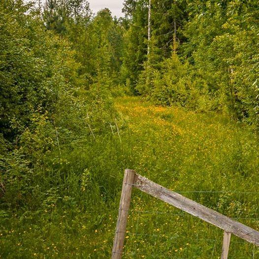 Skogstur fra Stampetjernet til Røverhula, Finnbråten og Rudskulen