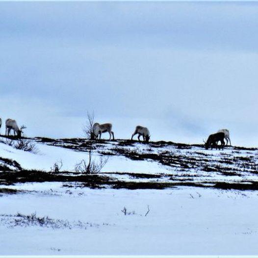 Fjellskitur Femundsmarka nordvest