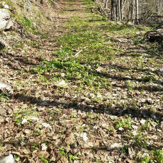 Rundtur Brønndalen-Trollsvann