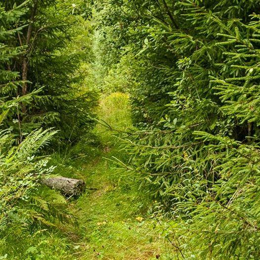 Skogstur fra Mellomhammeren til Seteråsen og Taterstigen