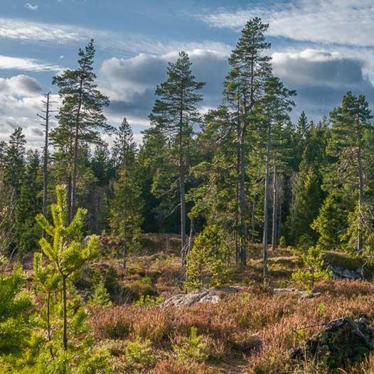 Skogstur fra Kopperud til Bjørnholen, Kohinor og Småtjerna