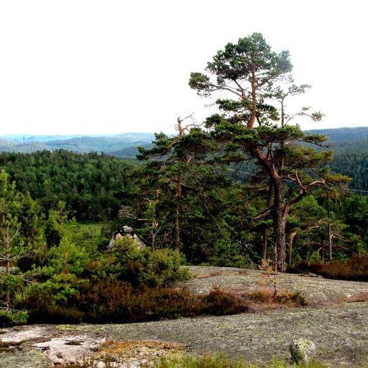 Rundtur Frolands Verk – Einerfjell - med avstikker til Blesehelleren