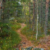 Skogstur fra Stampetjernet til Farshatten, Lunderåsdammen og Røverhula
