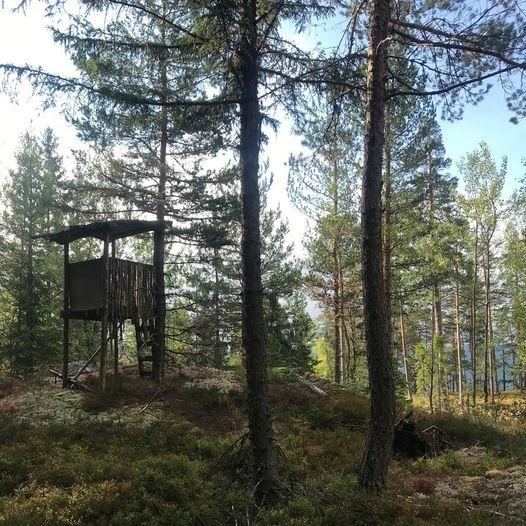 Vesle Fleksåsen - Solli - Gamle Lyngdalsvei