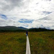 Topptur til Storskarven (Skarvan og Roltdalen nasjonalpark)