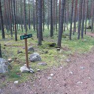 Rundturer i Tuppeskogen