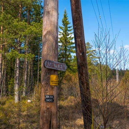 Skogstur fra Asakmoen til Hauglifjellet, Barnefoten og Stordalen