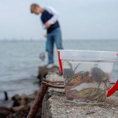 Ta med barna på krabbefiske