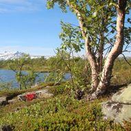 Fossegård (Evenesdalen) til Bleiknes (Saltdal)