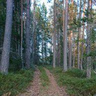 Håvenut / Hovdenut (Nissedal) fra Sandnes Hyttegrend