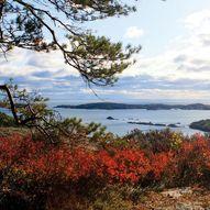 Trulsvikknuten - Skarsvann aktivitetspark ved Risør
