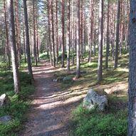 Tuppeskogområdet