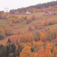 Rundtur Åsgardane - Snodalen - Vindfallet