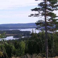Runde om Bjørnlihaugen/Svartjennet fra Milepelen.