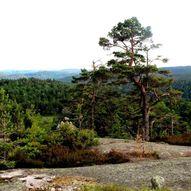 Frolands Verk – Einerfjell - Osevollen i Kverve  med avstikker til Blesehelleren