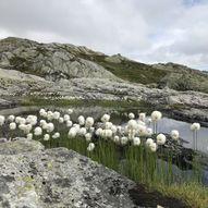 Tre topper - én tur, Nygard i Modalen