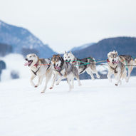 Hundekjøring i Hemsedal