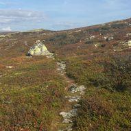 Nyskolla til Øyungshytta langs Rondanestien