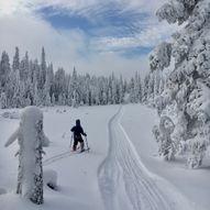 Kanada til Drammen på ski