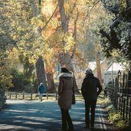 Scottish Tree Festival: Attadale Gardens Self-Guided Tree Tour