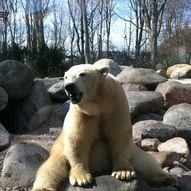 Isbjørnklubben