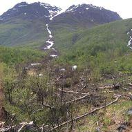 Olderdalen rundt, Kåfjord