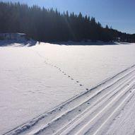 Skitur gjennom Nordmarka
