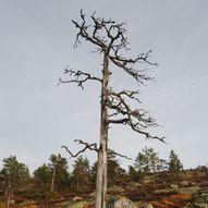 Befjell, høyeste topp i Froland kommune